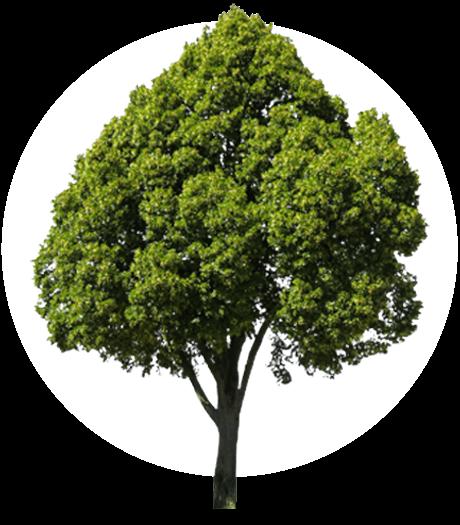 Akkusys pflanzt einen Baum für Ihre Bewertung